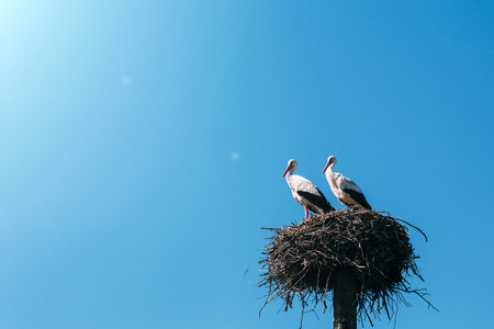 two storks in the nest Stock fotó