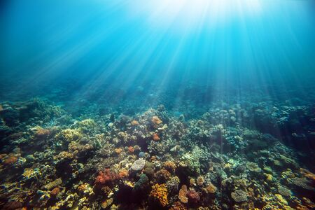 Underwater coral reef on the red sea
