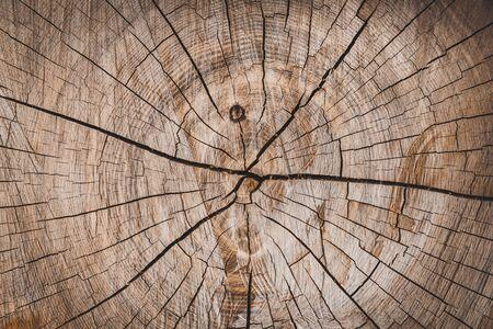 sfondo di un ceppo di legno