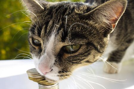 A cat named Mila loves money, close-up, on a beautiful background. Banco de Imagens