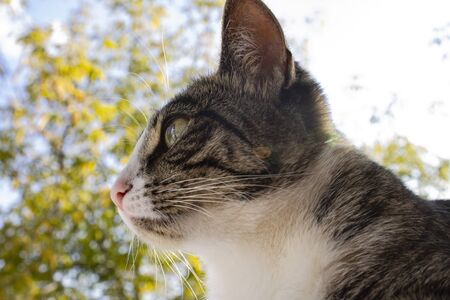 Portrait of a cat named Mila, close-up, on a beautiful background.