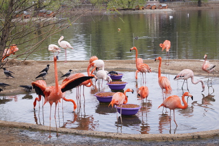 Flamingo pink, white and orange in water