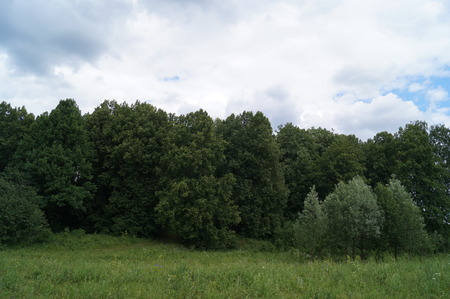 frequent: Meadow and forests in summer