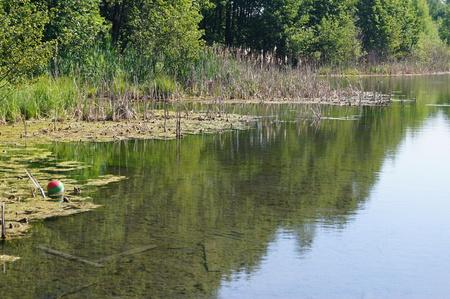 mundo contaminado: Pequeño estanque lleno de basura y agua flora