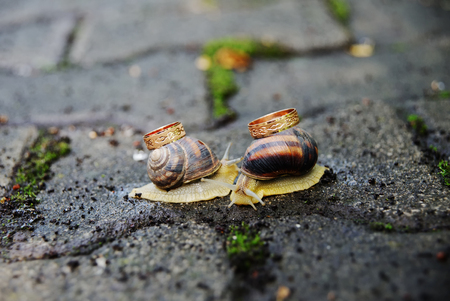 caras emociones: The snail on the shell carries the engagement rings close-up against the wet asphalt