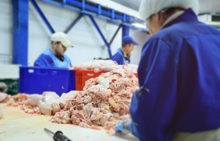 poultry workers cut up a chicken carcass. Food industry Фото со стока