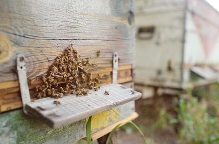 bees on a background of wooden hives close-up Stock Photo
