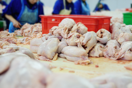 the poultry processing in food industry. Deboning chicken. Standard-Bild - 110222685