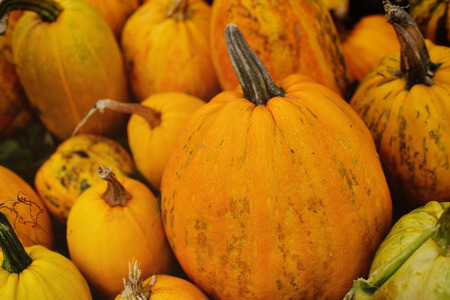 a large harvest of pumpkins on the background of the garden Standard-Bild - 109609961