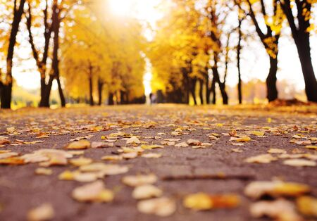 beautiful autumn landscape - Park with alleys , yellow dry leaves, leaves. Imagens