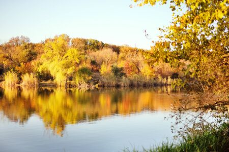 beautiful autumn landscape - trees with yellow leaves on the background of a Park, pond , river or lake. Autumn concept.