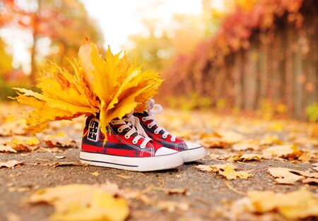 red sneakers with yellow maple leaves inserted in them close-up on the background of the autumn Park. Autumn concept, space for text, copy space.