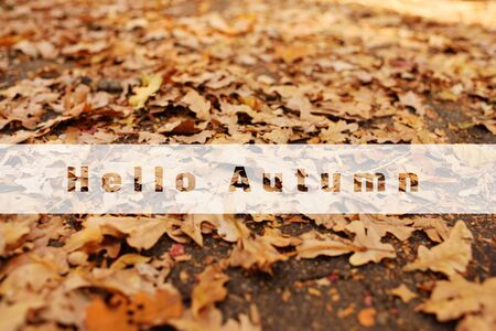the inscription Hello autumn on the background of yellow leaves. Autumn concept