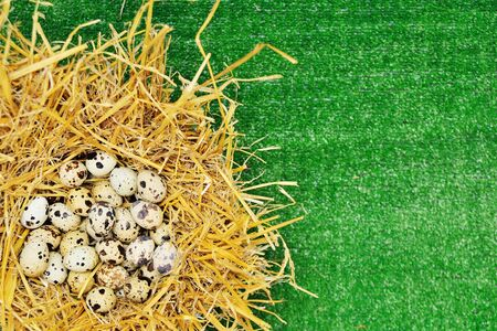 quail eggs in a nest of hay on a background of green grass. Space for text, copy space