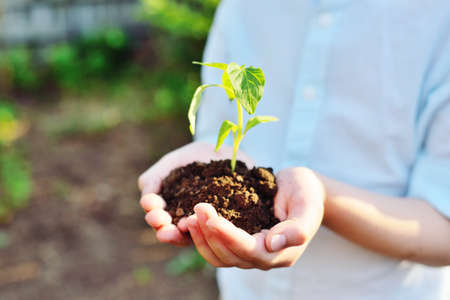 Close-up of hands holding a handful of earth with a young green plant seedling . The concept of ecology, spring, new life.