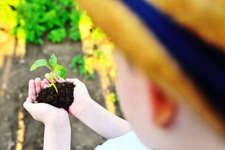close-up - childrens hands hold a handful of earth with a green sprout or seedling. The concept of gardening, ecology Standard-Bild