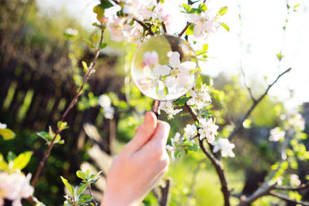 close-up of a hand with a magnifying glass on the background of spring blooms. Gardening.