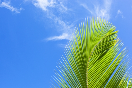 directly below: palm frond against blue sky Stock Photo