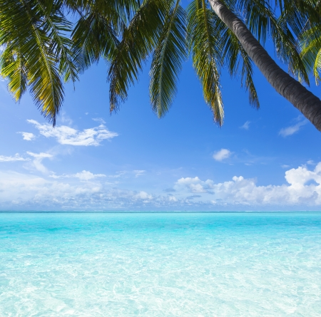the view from the shore of a palm tree on a tropical turquoise sea photo