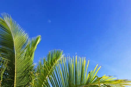 palm frond against blue sky photo