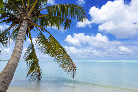 large green tropical palm tree hangs over the turquoise ocean Stock Photo