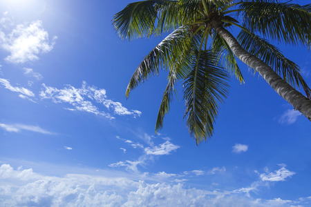lush. green palm on a background of blue sky with clouds