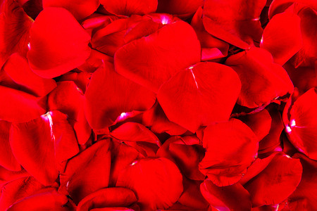 background from petals of a red rose close up Stock Photo