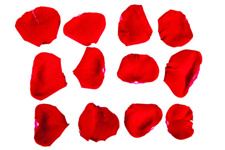 the isolated red rose-petals on a white background close up Stock Photo