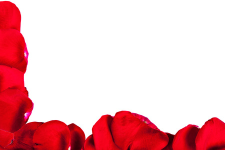 frame from petals of a red rose on a white background Stock Photo