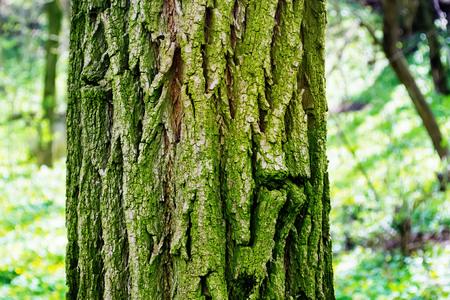 fission: bark of tree