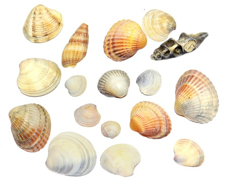 Beach shells on a white background. Stock Photo