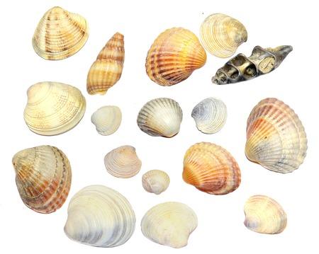 Beach shells on a white background. Standard-Bild
