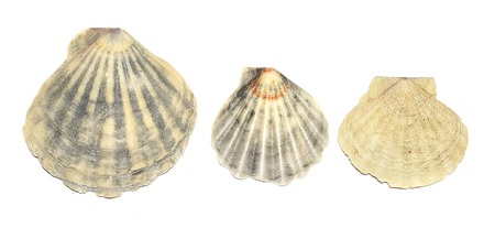 multiple image: Beach shells on a white background. Stock Photo