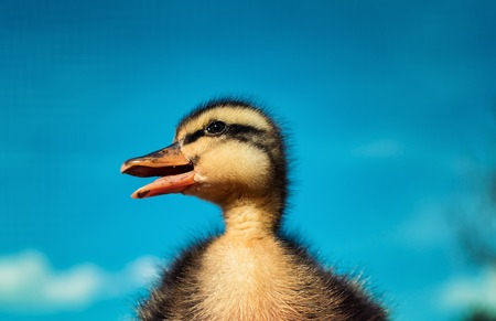 Little duckling against the sky.