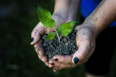 environmentalist: Hands holding seedling trees in the park.