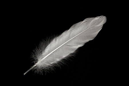 screensavers: Feathers in the dark. Light falling on beautiful feathers. Great plan. Can be used for presentations, clendar, screensavers.