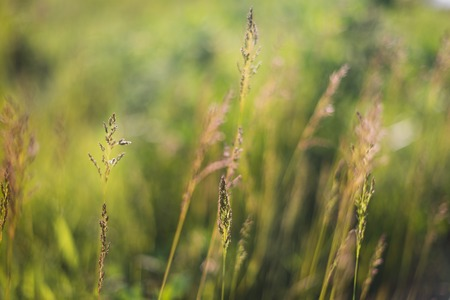 Green grass soft focus grand. Summer grass. Stock Photo