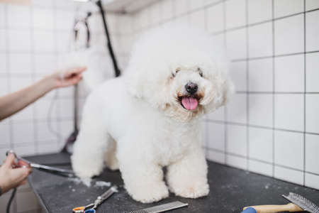 Grooming of dogs and small animals in the grooming salon.