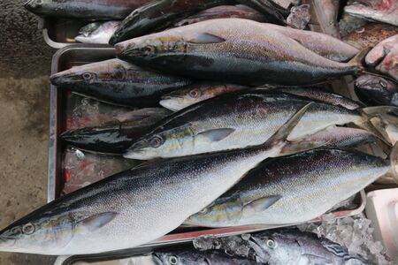 group of fresh catched fishes on a street market in Phuket, Thailand Stok Fotoğraf