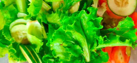 Green lettuce salat leaves, tomato and cut cucumber in full frame closeup.