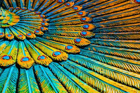 Full frame decorative peacock feather wreath, Hinduist art in Batu Caves, Kuala Lumpur, Malaysia, edit digital, looks abstract in yellow, turquoise.