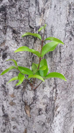 close up of small plant growing out of a tree bark