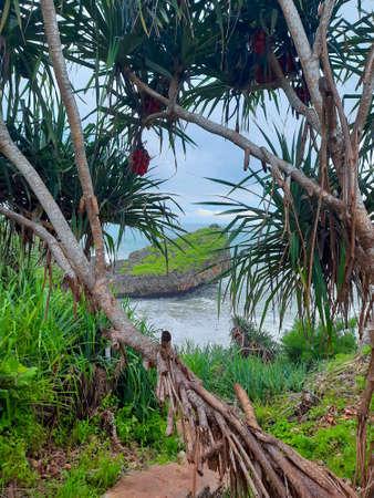 Frame view through palm trees from a green rock plateau to a rocky lagoon beach at a coast from Gunung Kidul Standard-Bild