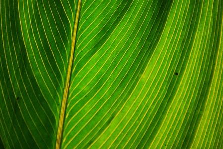 close up leaf