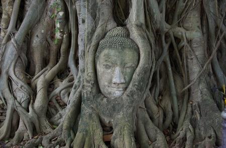 buddha head stuck in the tree1