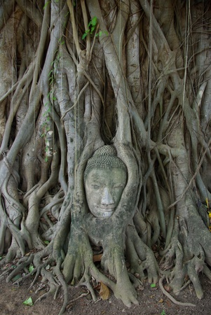 ayuttaya: buddha head stuck in the tree2