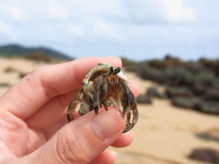 Hermit crab in the hand