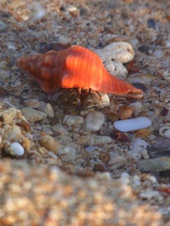 Hermit crab on the sand Stock Photo