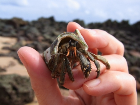 Hermit crab in the hand Stock Photo