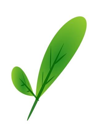 ingradient: vegetable